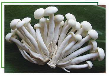 cogumelos-02