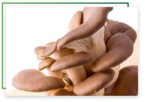 cogumelos-06-02
